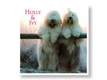 Holly & Ivy Christmas Cards Prevent Breast Cancer Charity UK