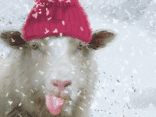 Sheeps Pink Hat Prevent Breast Cancer Charity Christmas Cards